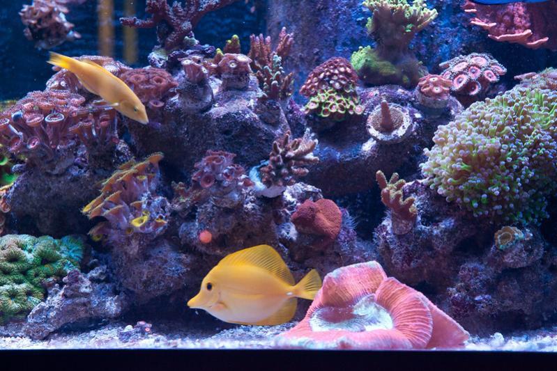Name:  aquarium-middle.jpg Views: 621 Size:  95.3 KB