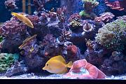 Binford4000's Beautiful Reef-aquarium-middle.jpg