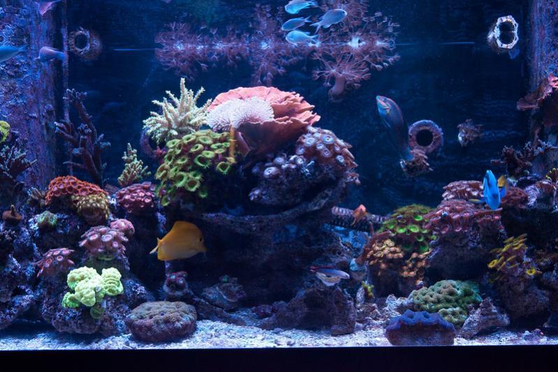 Name:  aquarium-right.jpg Views: 906 Size:  83.1 KB