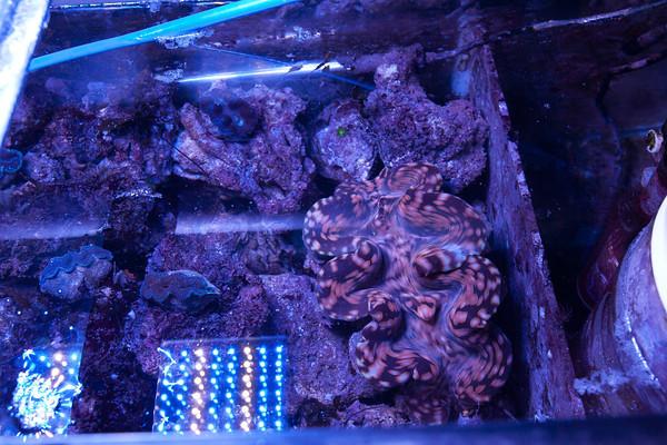 Name:  clam.jpg Views: 579 Size:  132.5 KB