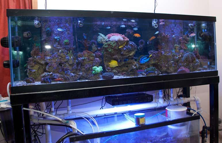 Binford4000 S Beautiful Reef