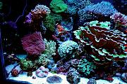 Daddybiggs' Mixed Reef-left-side.jpg