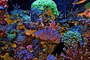 Daddybiggs' Mixed Reef-middle-tank.jpg