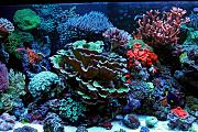 Daddybiggs' Mixed Reef-middle2.jpg