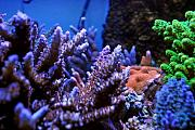 DBarsotti's SPS Jungle-acros.jpg