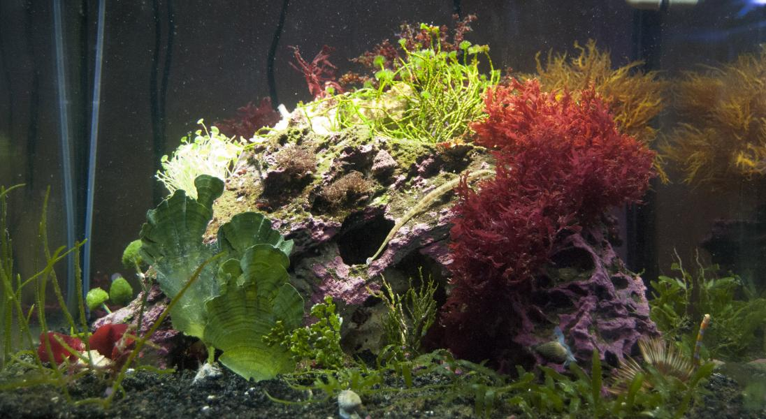 Coral Reef Aquarium - Featured Reef Aquariums - dputt88's Macro Nano