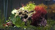 Reef Tank of the Month