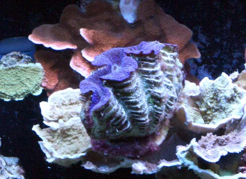 Name:  clam.jpg Views: 497 Size:  55.0 KB