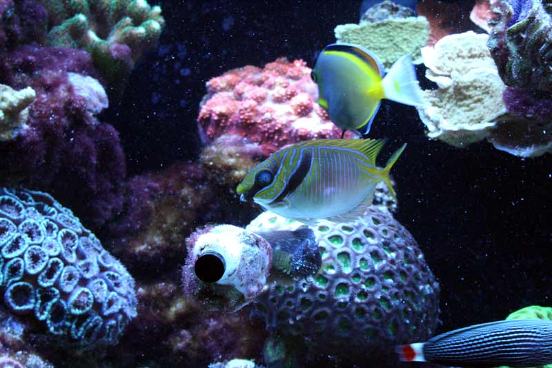 Name:  rabbit-fish.jpg Views: 475 Size:  58.1 KB