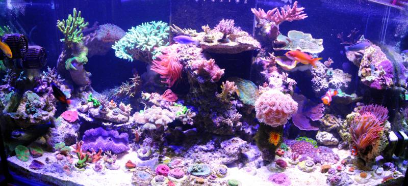 Coral Reef Aquarium - Featured Reef Aquariums - FiReBReTHa's Smokin' Reef