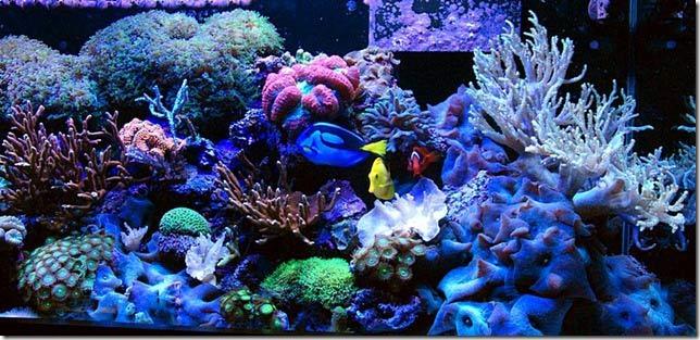 Luisgo 39 S 125g Coral Garden