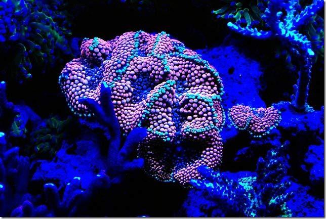 Name:  pink-ricordea.jpg Views: 1646 Size:  64.6 KB