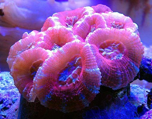 Name:  red-acans.jpg Views: 1287 Size:  43.5 KB