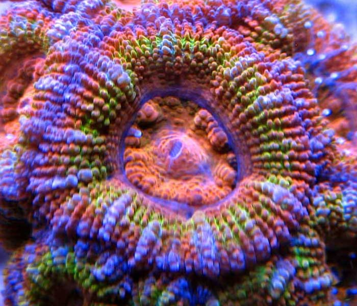 Name:  acan-rainbow.jpg