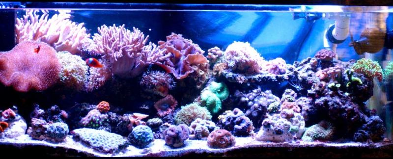 Coral Reef Aquarium - Featured Reef Aquariums - Mrs. Binford's Beautiful Reef