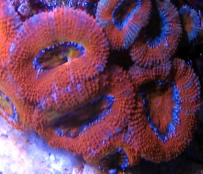 Name:  red-acans2.jpg Views: 774 Size:  74.2 KB