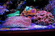 PJR's 135g Awesome LED Reef-brains.jpg
