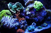 PJR's 135g Awesome LED Reef-front-right.jpg