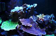 PJR's 135g Awesome LED Reef-left-area.jpg