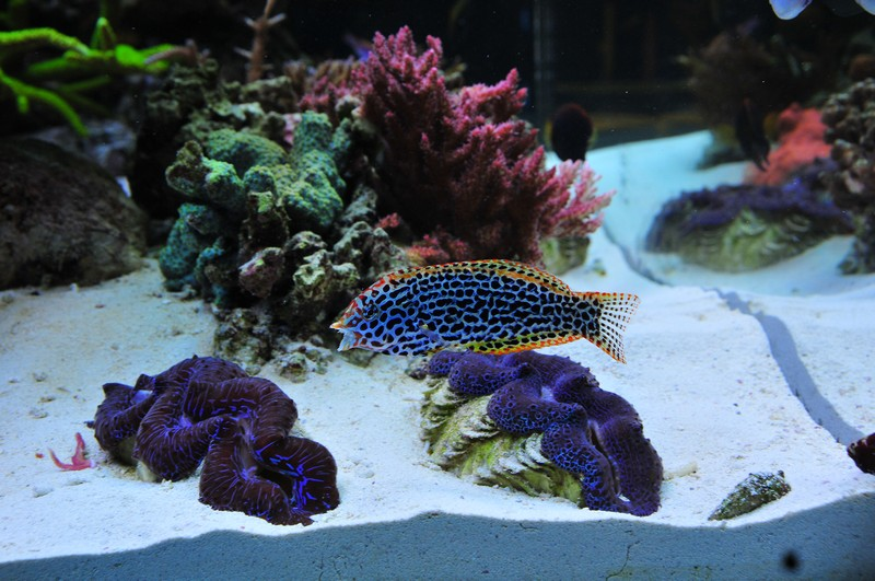 Name:  clams.jpg Views: 1345 Size:  186.2 KB