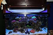 Preuss Pets  200g Deep Dimension SPS Tank-lights.jpg