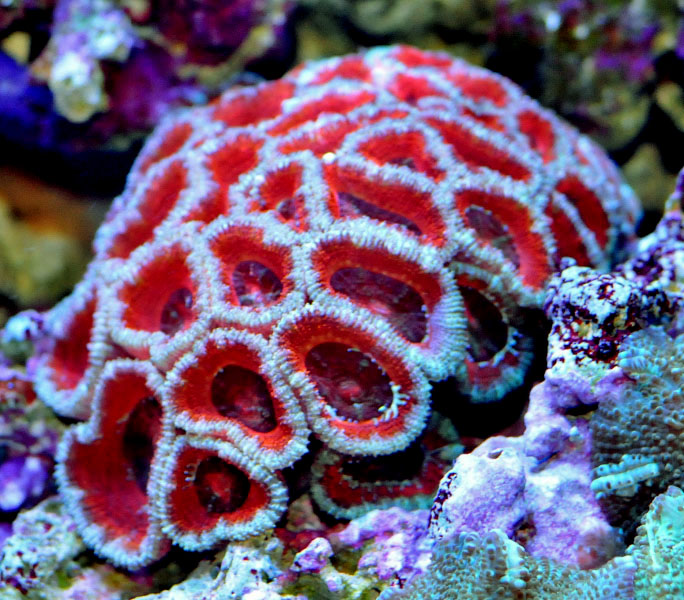Name:  acan2.jpg