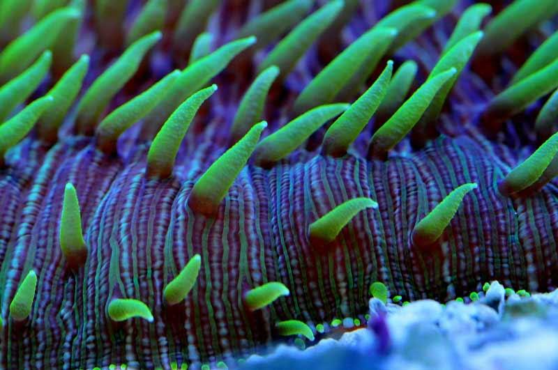 Name:  fungia-macro-photo.jpg Views: 1558 Size:  50.8 KB