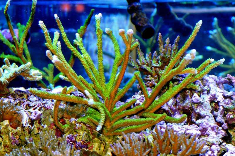 Name:  green-slimer.jpg Views: 1801 Size:  86.8 KB