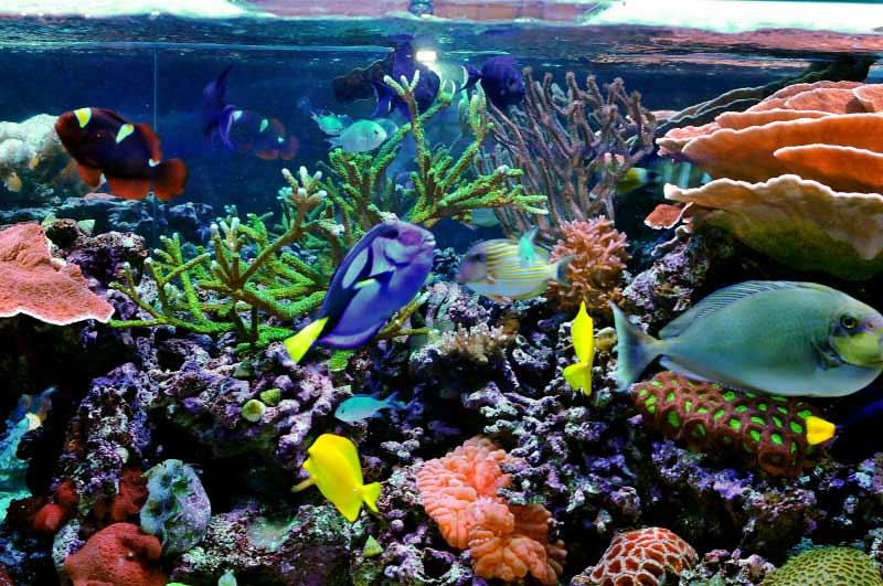 Name:  reef1.jpg Views: 1994 Size:  84.9 KB