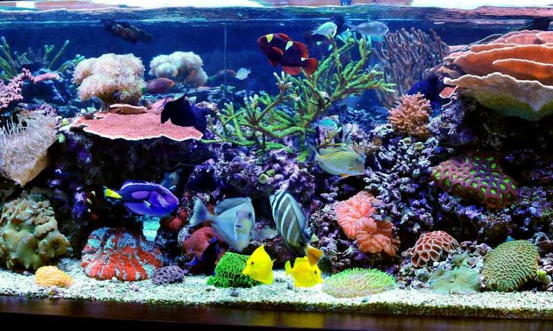 Name:  reef2.jpg Views: 2023 Size:  85.3 KB