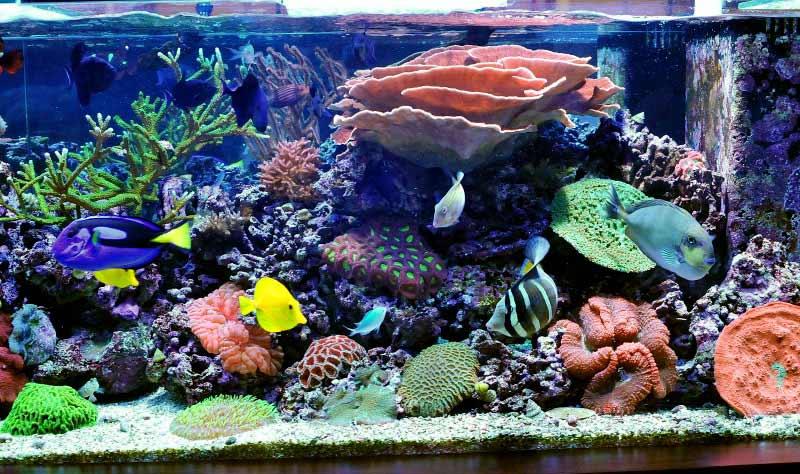 Name:  reef4.jpg Views: 2055 Size:  88.6 KB