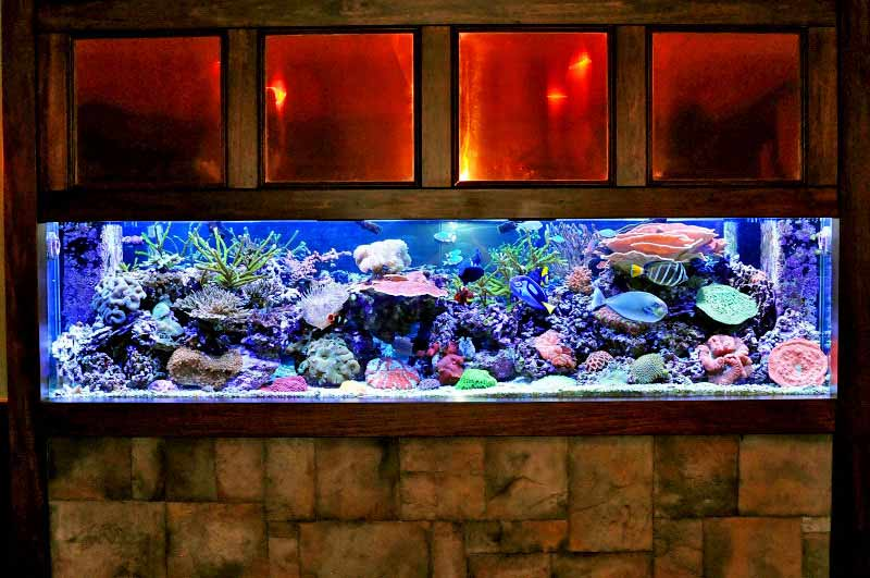 Coral Reef Aquarium - Featured Reef Aquariums - Richie Rich's Reef