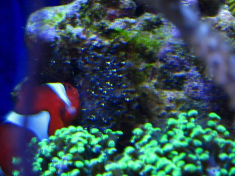 Name:  clown-eggs.jpg Views: 709 Size:  62.0 KB