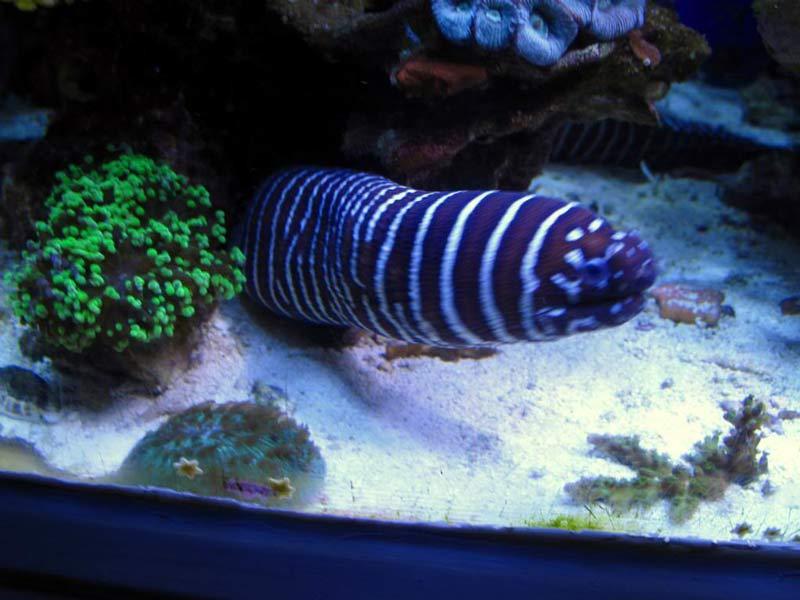 Name:  eel.jpg Views: 839 Size:  60.2 KB