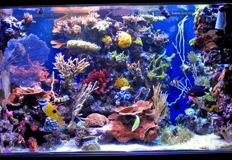 slapshots non photo reef slapshot full tank shot 3937d1323704542 - 2011 Tank of the Year - sponsored by Bashsea