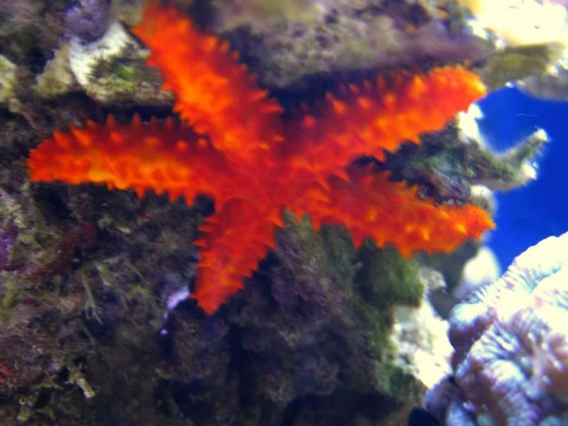 Name:  starfish.jpg Views: 677 Size:  50.1 KB