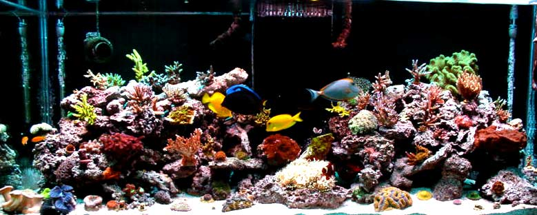 tm01s fabulous reef tm01 fts 3938d1323705181 - 2011 Tank of the Year - sponsored by Bashsea