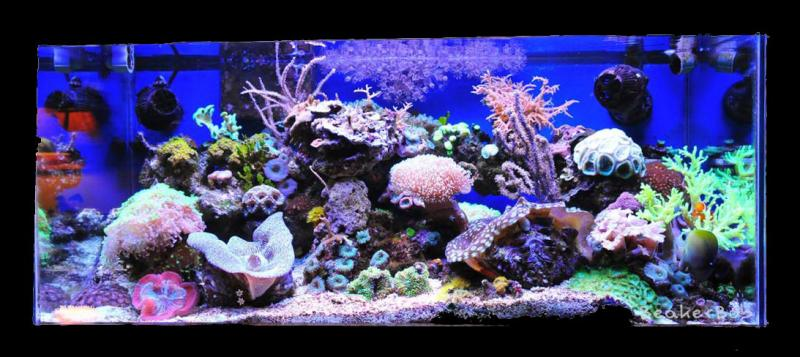 Coral Reef Aquarium - Featured Reef Aquariums - Tom@HassletMI's Mixed Reef