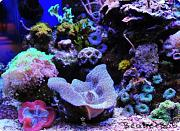 Tom@HassletMI's Mixed Reef-leftfront.jpg