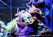 Tom@HassletMI's Mixed Reef-right-endview.jpg