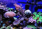 Coral Reef Aquarium - rightfront.jpg
