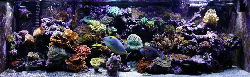 Coral Reef Aquarium - Featured Reef Aquariums - Vega15's Gorgeous Mixed Reef