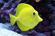 Youngtimothy's Beautiful Reef-tang.jpg