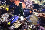 Zachtos' SPS Forest-tangs.jpg