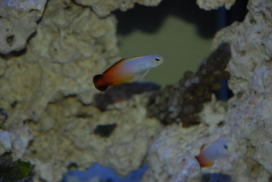 Coral Reef Aquarium - Fish Finder - FIREFISH
