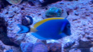 Coral Reef Aquarium - Fish Finder - Powder Blue