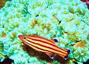 -fotosenero2012022-copy-jpg