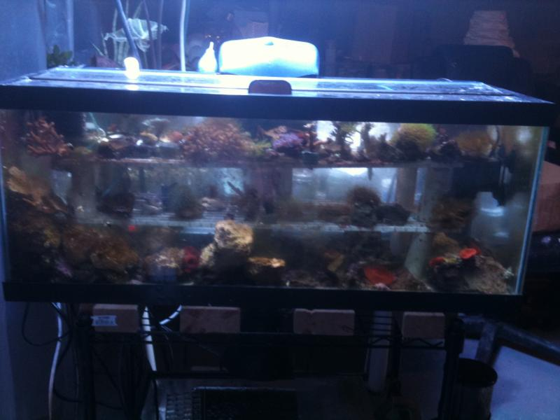Coral Reef Aquarium - Grow Out Contest - msumatt's 2011 growout contest thread