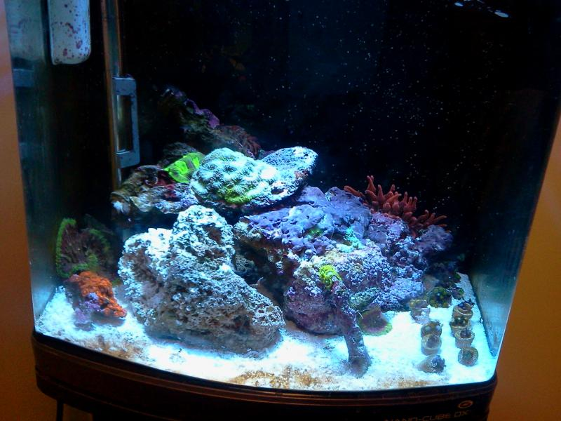 Coral Reef Aquarium - Grow Out Contest - pjr's GrowOut contest thread