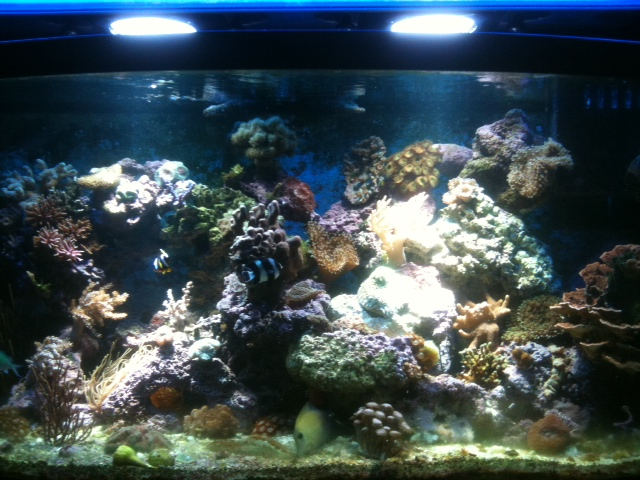 "Coral Reef Aquarium - Hardware - My experience with new Aquatic life 48"" G12 HID"